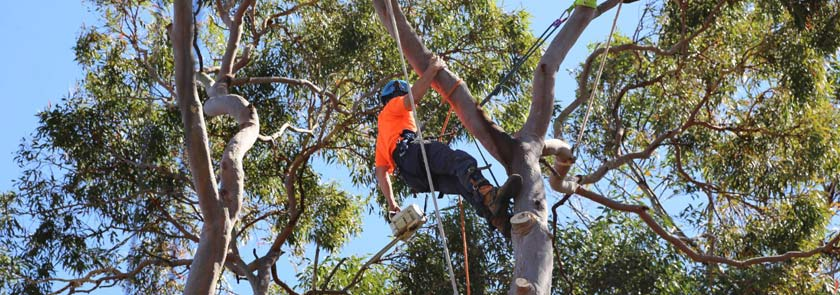 Tree-removal-contractor